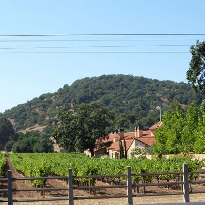 Salvestrin Vineyard, St. Helena