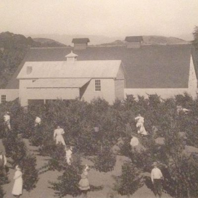 In the vineyard, circa 1900
